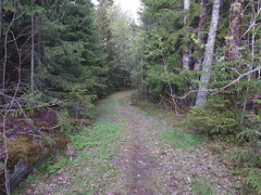 IMG_20190511_190618edit (mtbboy1993) Tags: opencamera rawtherapee ihlen askim indreøstfold østfold norway norge skog forest trail sti