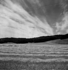 Paso Robles Countryside (bingley0522) Tags: rolleicordvb xenar75mmf35 trix diafine yellowfilter epsonv500scanner pasorobles sanluisobispocounty freshlymowedfield telephonelines autaut