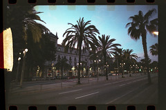 (Just A Stray Cat) Tags: fuji fujifilmfujicolor natura 1600 palm tree trees palms barcelona spain sunset dusk 35mm 35 mm film analog analogue