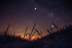 Saturn passing behind the herbs (Fabrice Gillet) Tags: blur sky focus herbs planets saturn pluto milkyway stars galaxy corn wheat field summer night