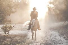 (https://fotogulczynska.wordpress.com/) Tags: equine equinephotography arabianhorse arabian horsearabian horseman pferde sunset outdoor cowboy countryside