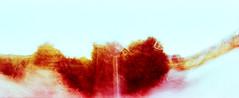 7_79960007_natasha_vassiliou (natasha_vassiliou) Tags: film analogue expired colour panoramic blue fujichrome provia horizon 120 degrees lens lomography cyprus