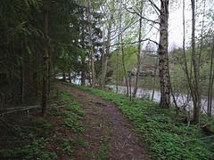 Indre Bruhode (mtbboy1993) Tags: langnes askim indreøstfold norge norway østfold forest skog sti trail glomma river opencamera rawtherapee