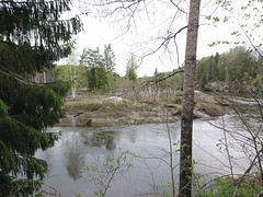 Langnes Island (mtbboy1993) Tags: askim norge norway forest skog river glomma island water trees trail sti indreøstfold østfold opencamera rawtherapee høyrefløy øy