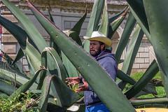 Tlachiquero. (Emmanuel Oliva) Tags: canon 50mm mexico