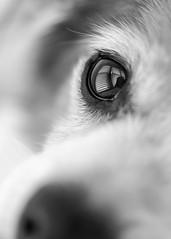 Soul awakener (risaclics) Tags: black white risa 60mmmacro animals dogs july2019 nikond610 canines pets portrait blackandwhite