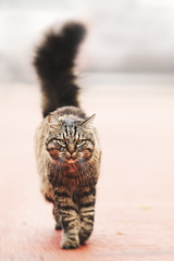 The CAT (Plume.photo) Tags: chat cat félin