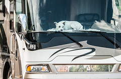 Dog in RV (scattered1) Tags: recreationalvehicle rv mi marquette upperpeninsula canine parade michigan summer dogbed northernmichigan view northern independenceday dashboard july4th 2019 dog bed