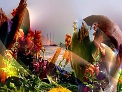Flowers (i_kaya@rogers.com) Tags: lake flowers face art photo photograph photography lakeontorio canada ontario toronto sailingboat