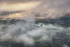 The Morning Fog DSC_8920 (BlueberryAsh) Tags: fog strathcreek victoria melbourne clouds cloudsstormssunsetssunrises landscape hills green weather abcweathertv countryvictoria morning sunrise tree nikond750 nikon24120