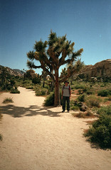 Scan-190719-0032 (alberthuynhphoto) Tags: joshua tree national park 35mm fuji superia 400 contax t2