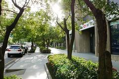 台中街景 Taichung Streetscape 291 (葉 正道 Ben(busy)) Tags: 台中 街景 taichung streetscape 台灣 taiwan street tree 樹木