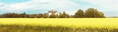 Harvest of Plenty...... (Mr. Happy Face - Peace :)) Tags: art2019 canola rapeseed farmland albertabound prairies summer canada