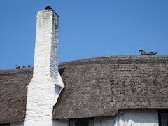 Thatched Roof - Porlock, Somerset (Balticson) Tags: thatchedroof cottages somerset porlock roofs westsomerset ship ducks thatching thatched thatchedcottages