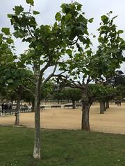 #SanFrancisco (Σταύρος) Tags: trees park sanfrancisco ggp goldengatepark kalifornien californië kalifornia καλιφόρνια カリフォルニア州 캘리포니아 주 cali californie california northerncalifornia カリフォルニア 加州 калифорния แคลิฟอร์เนีย norcal كاليفورنيا sf city sfist thecity санфранциско sãofrancisco saofrancisco サンフランシスコ 샌프란시스코 聖弗朗西斯科 سانفرانسيسكو parc praça 公園 πάρκο parco 공원 parque парк urbanpark metropolitanpark municipalpark publicpark localpark ggpark
