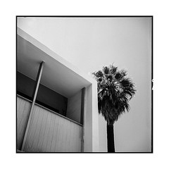 in one shot • palm springs, ca • 2018 (lem's) Tags: building midcentury architecture palm tree palmier springs ca california desert street rue city ville rolleiflex t