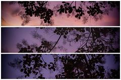 Twilight Leaves (*Photofreaks*) Tags: adengs wwwphotofreakseu essen ruhr ruhrgebiet deutschland germany nrw northrhinewestphalia nordrheinwestfalen leaves art blätter kunst abenddämmerung twilight dusk