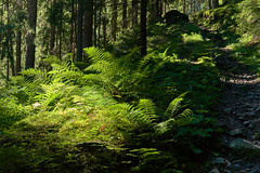 Green Paradise (Ernst_P.) Tags: aut farn hoarleg hoarlig inzing österreich tirol wald sigma macro 50mm f28 forest bosque nohdr