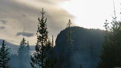 Smoke (Migge88) Tags: kanada urlaub fog nebel baum tree pine tannenbäume walt forest turm tower grün sonnenuntergang sunset sonne wolken clouds hiking wandern landschaft landscape yoho national park canada america amerika nord mysterie green berge mountains rauch smoke rocky
