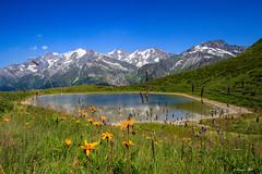 Le Mont (encore un peu) Blanc (Savoie 07/2019) (gerardcarron) Tags: beaufortin canon80d flore fleurs lac landscape morning montagne mountains mtblanc paysage savoie lacrosette