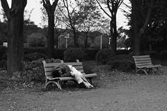 Fallen in the line of duty (lebre.jaime) Tags: japan 日本 tokyo 東京 ootemachi 大手町 bench sleeping analogic mediumformat mf film120 bw blackwhite noiretblanc pb pretobranco sw schwarzweis hasselblad 503cx planar cf2880 kodak kodachrome iso64 pkr epson v600 affinity affinityphoto
