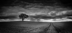 Black and white (paullangton) Tags: bw blackandwhite mono landscape nature field hertfordshire countryside tree lonetree canon 5dmk3 clouds contrast shadow