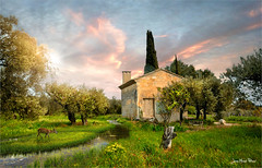 The Olive Tree (Jean-Michel Priaux) Tags: paysage nature landscape spring tree olive provence france sun sunlight littlehouse house priaux paint painting colors meadow pasture lonesome lonely alone vaucluse light