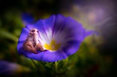 20170903_01335-Bearbeitet.jpg (markus.eymann@hotmail.ch) Tags: grün erdmännchen pflanze bokeh dunkel blau blume katalog tier säugetier composing natur farbenfroh