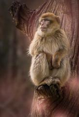 20180329_03182-Bearbeitet.jpg (markus.eymann@hotmail.ch) Tags: primat grau dunkel tier sepiatöne katalog affe säugetier