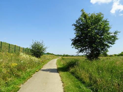 The Path near Benwell