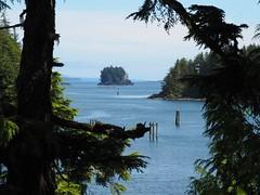 Ucluelet Idyll 🇨🇦 (Céanndhubahn) Tags: britishcolumbia vancouverisland ucluelet beautyofwater pacific idyll tsuga