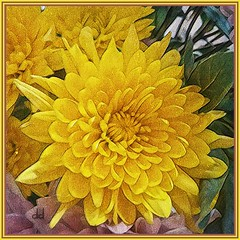 Yellow Flower...HSS (novice09) Tags: hss flowers yellow ipiccy vinci slidersunday