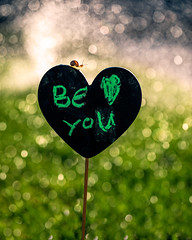 be-you-tiful (auntneecey) Tags: beyoutiful bokeh heart snail love 365the2019edition 3652019 day209365 28jul19 hss sliders