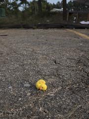 Abandoned Rubber Duckie (DayBreak.Images) Tags: suburban dekalbcounty atlanta georgia abandoned toy canondslr canoneflens lightroom