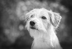 You know what I like about people? Their dogs. (Ranveig Marie Photography) Tags: ranveigmariephotography ranveigmarienesse ranveignesse photo foto fotograf photographer photos norge norway noruega norvege norwegen norsk norwegian