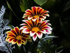 Botanical Flowers (Jacek Klimczyk) Tags: jklimczykyahoocom jacekklimczyk natur environment botanic botanical krakow green color canon5dmarkiv canon