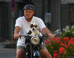 Riding Shotgun (MikeTibbotts) Tags: motorbike motorcycle biker dog pillion passenger nordlingen goggles