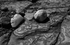 Point Lobos (bingley0522) Tags: nikkormatftn micronikkor55mmf35 trix diafine epsonv500scanner pointlobos coastalcalifornia rock autaut ordinarythings commonplacethings montereycounty