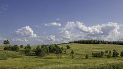 0R4A6885 (andre.pugachev) Tags: пейзаж холмы лето день сосны небо облака лес луг поле sky clouds trees tree summer meadow hill landscape rural