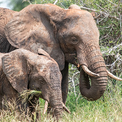 (Markus Hill) Tags: manyara tansania africa travel elephant nature animal canon safari elefant tarangire 2019