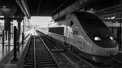 TGV Gare Saint Charles. (Petoskey Drones) Tags: train station bw marseille gare departure perspective bullet rail