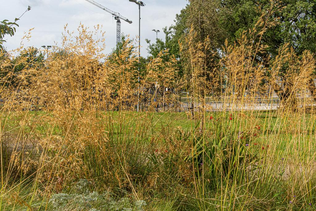 GRANGEGORMAN COLLEGE CAMPUS - NOW TU DUBLIN CAMPUS [PHOTOGRAPHED USING A VOIGTLANDER 40mm LENS]-1544614