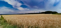 at the corner of the cornfield (PinoyFri) Tags: kornfeld wolken clouds nuages cornfield grainfield korenveld campodigrano maizal landschaft landscape panorama 全景 schwäbischealb swabianalb southerngermany süddeutschland badenwürttemberg wheat field summer sommer outside national naturally panorâmica