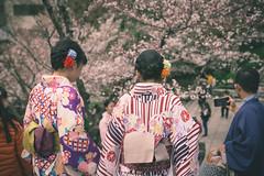 Nineizaka - Kyoto, Japan (nivagyag73) Tags: 2019 asia canon ef2470f28lusm eos5dmarkiii higashiyamaku honshu japan kansairegion kyoto kyōtoprefecture ninenzaka people spring cherryblossom cloth clothing cotton fabric kimono outdoor sakura
