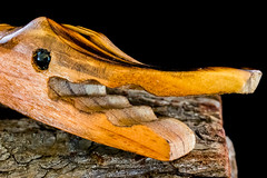 Macro Mondays: Made of Wood: Wooden Alligator Toy (Glotzsee) Tags: macro wood madeofwood macromondays