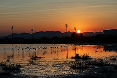 190718 SANTA POLA 003 (MAVARAS) Tags: mavaras amanecer rojos red flamencos santa pola alicante orange sunset flemish