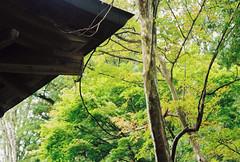 beginnings of autumn (Vinzent M) Tags: japan 日本 leica r r4 agfa vista zniv summicron 50 hida takayama gifu 高山 岐阜 飛騨