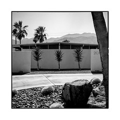 201 • palm springs, ca • 2018 (lem's) Tags: 201 numero number street rue midcentury architecture wall mur palm springs palmiers desert california ca rolleiflex t