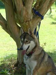 Maïtika (delphinecingal) Tags: cagnotte landes maïtika chien