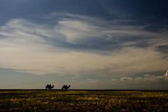 camel sillouette (Jamie B Ernstein) Tags: mongolia gobi desert gobidesert asia nikon camels sillouette sky clouds dusk evening animals